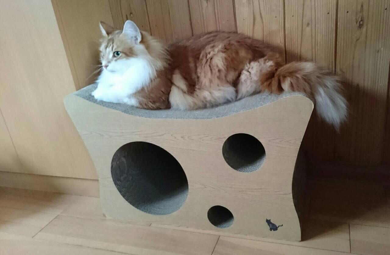 おすすめ猫グッズ・爪とぎ・Nico Neko (ニコネコ)キャットスクラッチャー